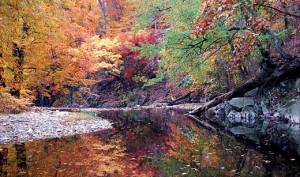 A view of a pleasant creek with autumn trees arond